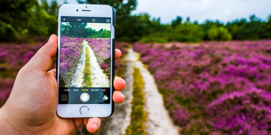 gardening with cell phone