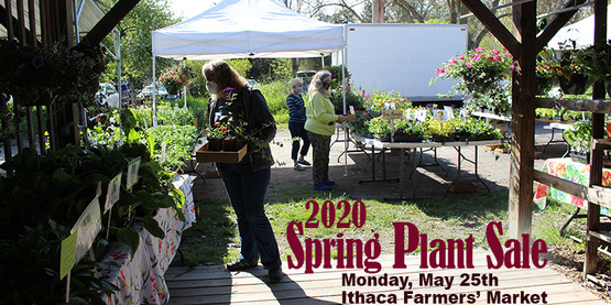 People shopping for plants at Ithaca Farmers' Market, wearing masks, 2020 Spring Plant Sale May 25th.