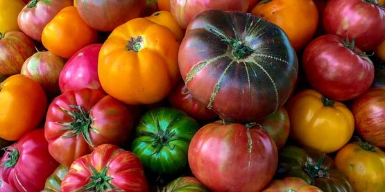 Organic heirloom tomato at the Jack London Square Farmers' Market in Oakland, CA, on Sunday, August 9, 2015. USDA photo by Lance Cheung.
