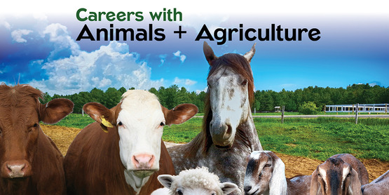 Careers with Animals and agriculture