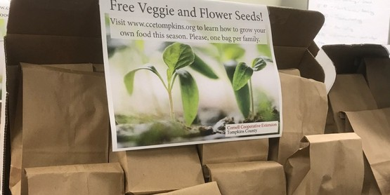 boxes of seeds in paper bags