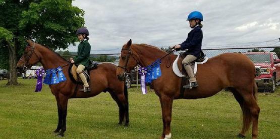 horse show photo
