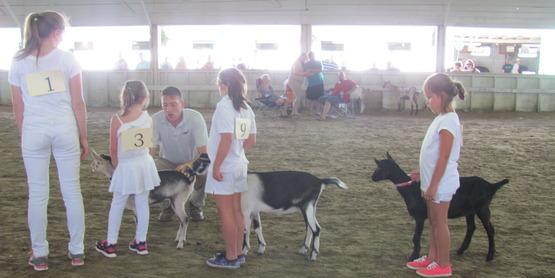 goat fair 2015