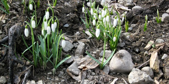 Fertilize spring flowering bulbs when shoots poke through the ground.