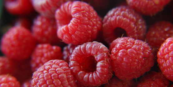 photo of fresh raspberries