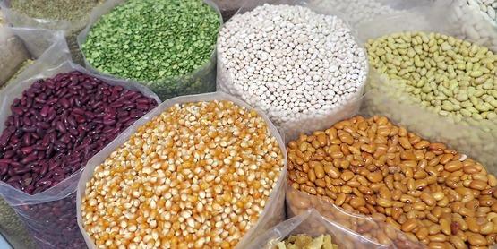 Grain - Seeds