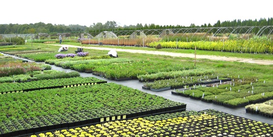 North Fork perennial farm