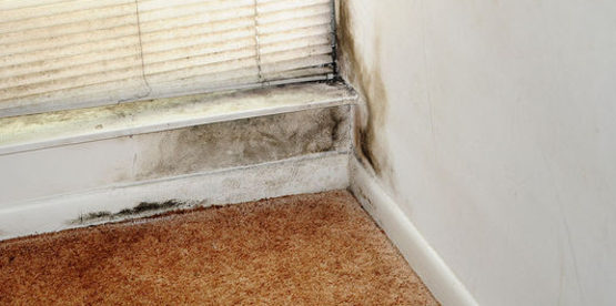 after flood waters recede, dangerous mold spears can begin to grow within 24 to 48 hours