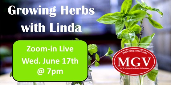 Learn the Art of Herb Gardening