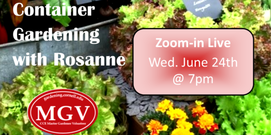 Learn the art of container gardening with vegetables and Flowers