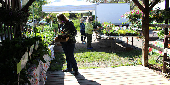 Shoppers wearing face masks choose plants at the 2020 Plant Sale at the Ithaca Farmers' Market.