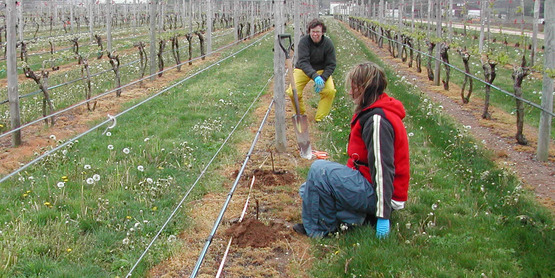 Alice and Libby planting vines in 2006.