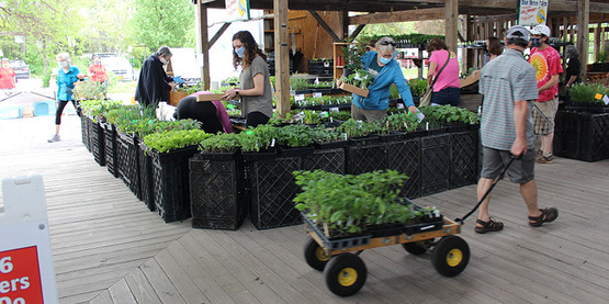 Man with a wagon filled with plants walks past the Blue Heron Farm stand at the 2020 Plant Sale at Ithaca Farmers' Market