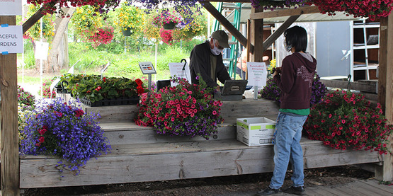 Customer purchases a hanging plant at Graceful Gardens booth at the 2020 Plant Sale at Ithaca Farmers' Market.