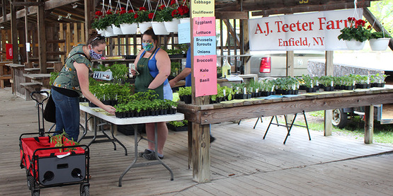 Shoppers at the A.J. Teeter Farm booth at the 2020 Spring Garden Fair & Plant Sale at the Ithaca Farmers' Market