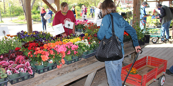 Shoppers at 2020 Spring Garden Fair & Plant Sale at the Ithaca Farmers' Market
