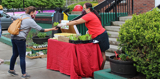 Mila Fournier distributes seedlings and seeds at Southsice Community Center