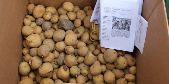 Seed potatoes and instructions for growing, donated by Matthew Spano