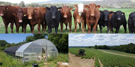 three farm scenes