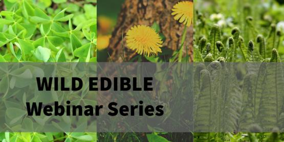 wild edible webinars