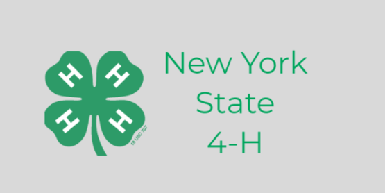 nys 4-h