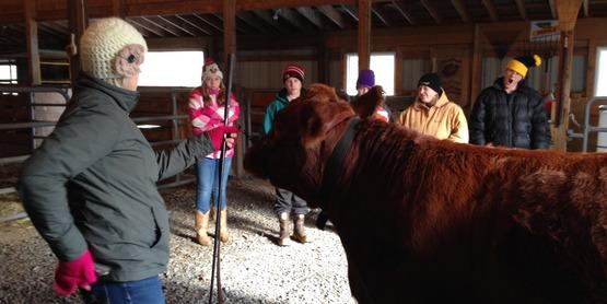 4-H Beef Workshop