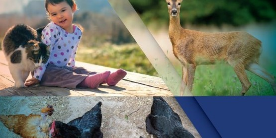 Deer, small child with a cat, chickens