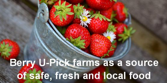 strawberry u-pick COVID