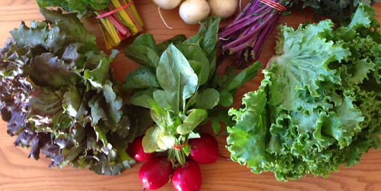 a selection of fresh vegetables for sale at Main Street Farms, from their website