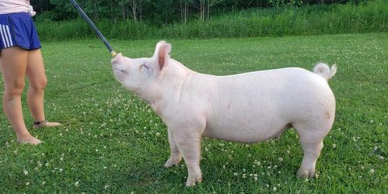 Jaylynn Swine Project