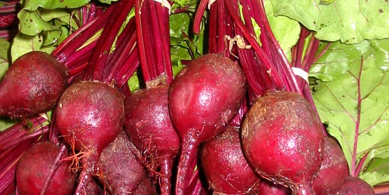 Beets at the DeWitt Farmers' Market, Ithaca