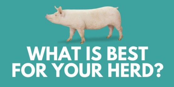 What's best for your herd?
