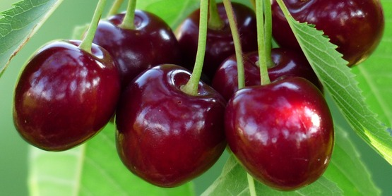 Cherry Bundle