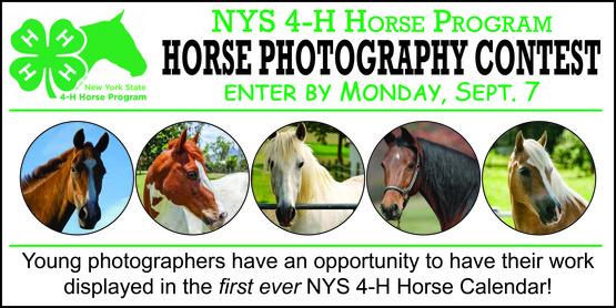 4-H Horse photo contest banner