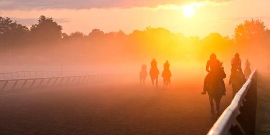 Racehorses at sunrise