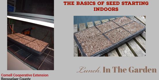 LITG Seeds