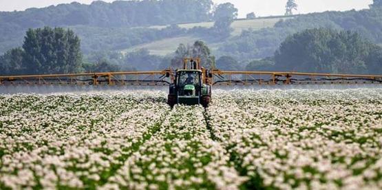 Herbicide resistant weed control