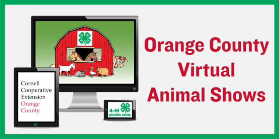 virtual animal shows