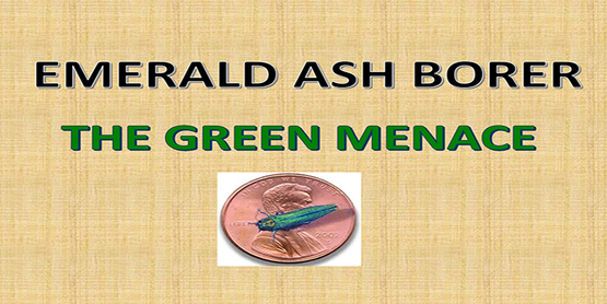 Emerald Ash Borer The Green Menace Title with picture of Emerald Ash Borer on penny to show scale