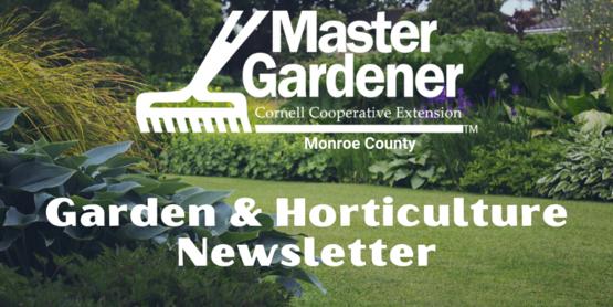 mg newsletter header