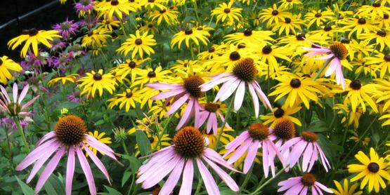 Perennials.