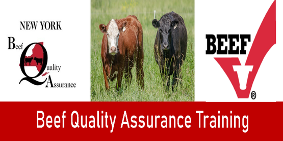 Beef Quality Assurance Training Title with picture of two beef cattle and New York Beef Quality Assurance Logo as well as Beef Logo.