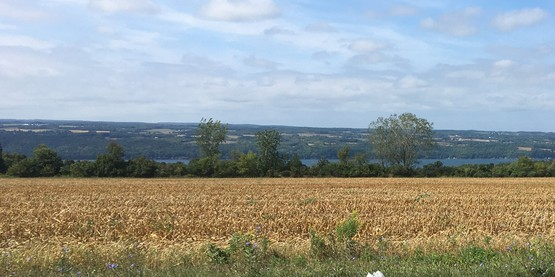 field in Finger Lakes