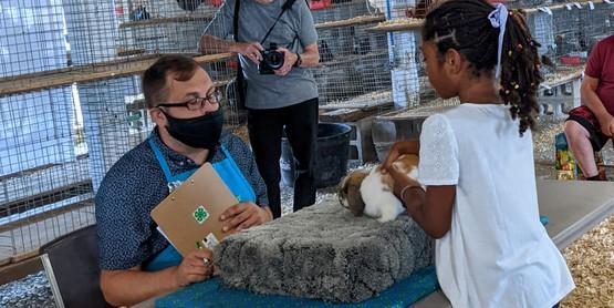 rabbit show at fair