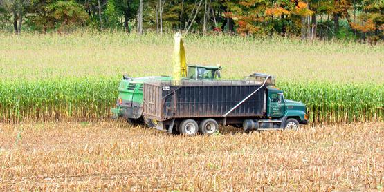Corn Silage Harvest