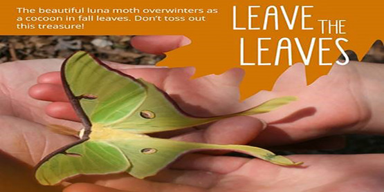 Leave the Leaves Title with picture of luna moth in a person's hands