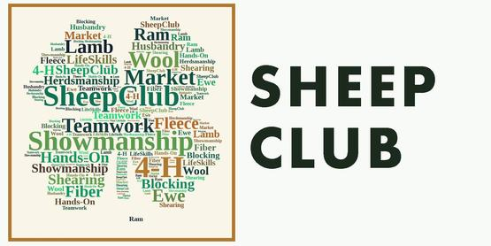 4-H Sheep Club Meeting