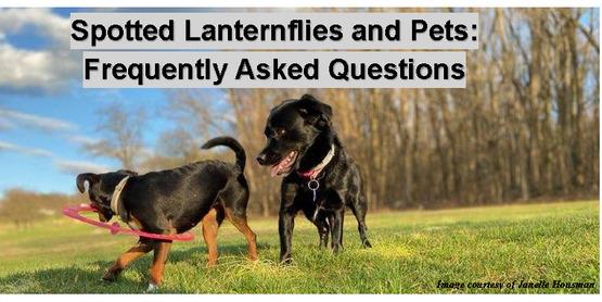 Spotter Lantern Flies and Pets