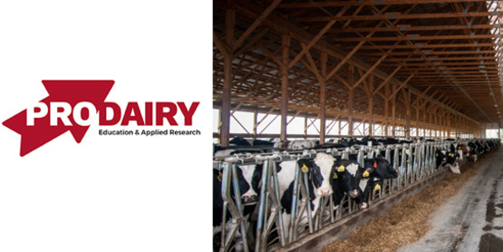 ProDairy and dairy cows