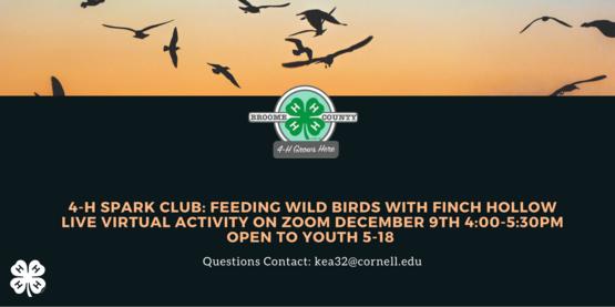 4-H SPARK CLUB: Feeding Wild Birds